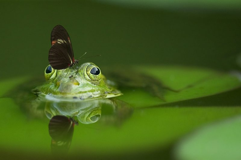 frog-540812_960_720